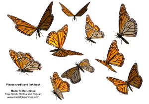 monarch_butterfly_clipart_png_by_madetobeunique-585x409