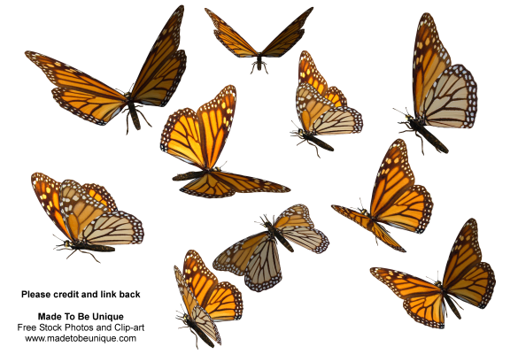 how to draw a butterfly flying