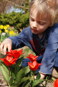 http://www.dreamstime.com/royalty-free-stock-photo-child-observing-tulips-garden-image9054535