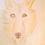 Barbara's Wolf, a student drawing done with crayon and colored pencils