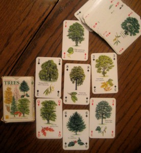 A glimpse of a few of tree and leaf varieties that we discussed and chose from.